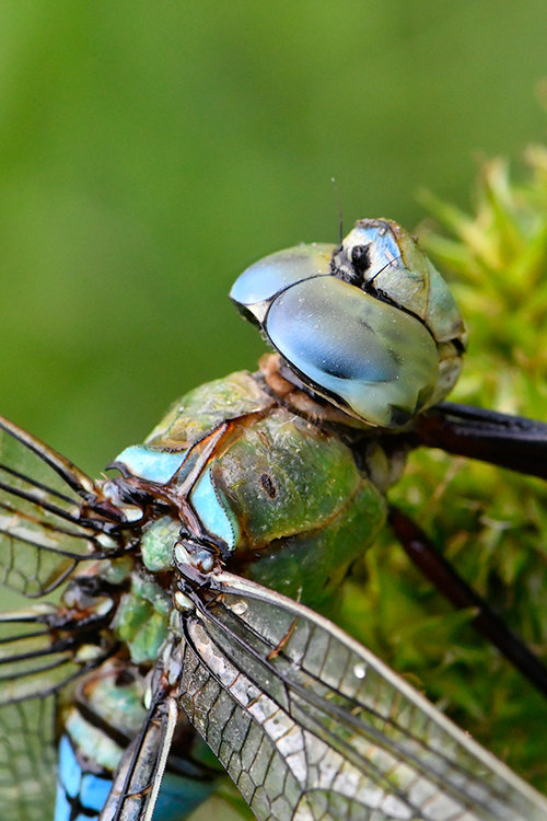 dragonfly.thumb.jpg.b926b88626d47b9606e986c29bfb8e51.jpg