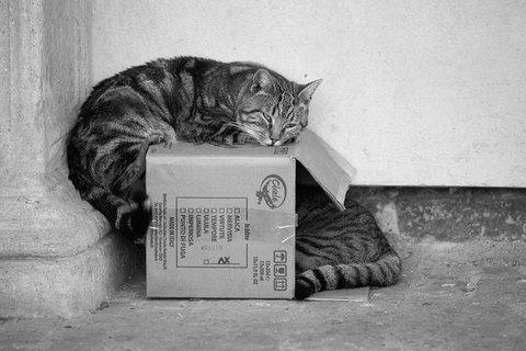 gatti del castello