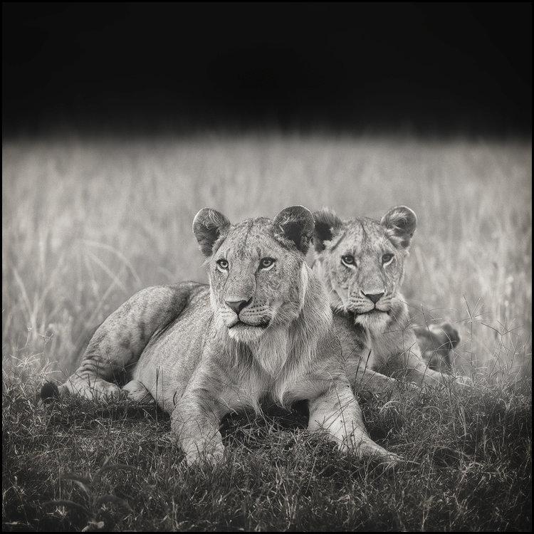 lions-den-V8-9059-soft-proof-nicolas--version-copy.thumb.jpg.1fcc7250619e48f5d09c9f076856222f.jpg