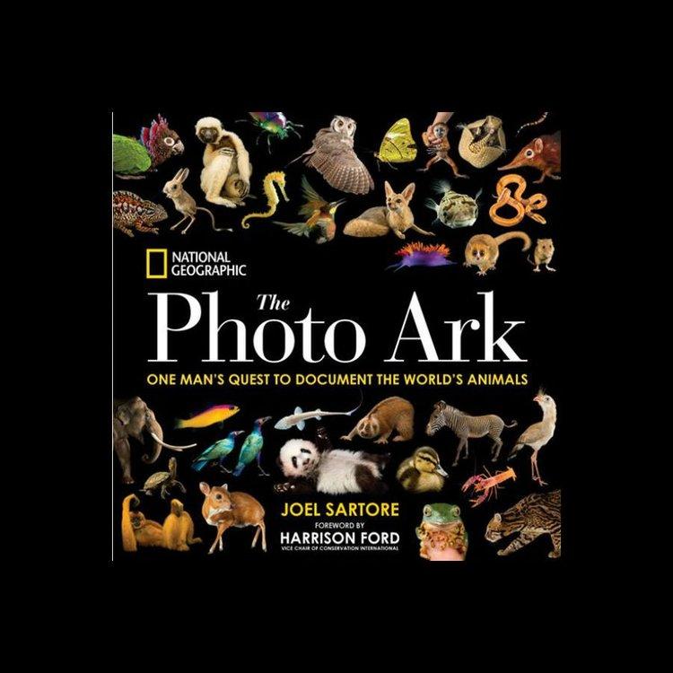 photoarkestore.thumb.jpg.bf40fa16d40a15d0fab6a86a9939b9d8.jpg