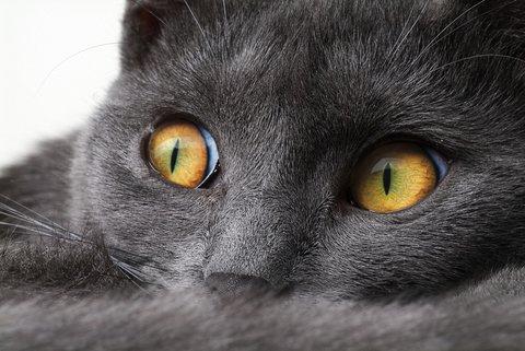 Occhi grandi