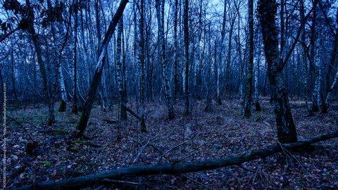 a notte nel bosco nuovo.