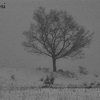 Paesaggi invernale1