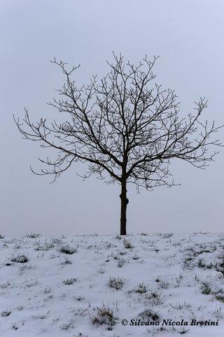 """Neve """"urbana"""""""