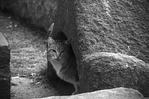 Dal sarcofago