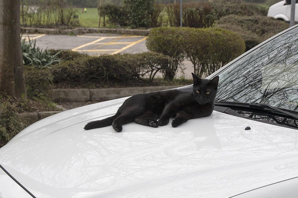 blackcat2.thumb.jpg.b39cca309e2629eee464918343556023.jpg