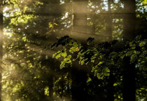 La magia del bosco 2