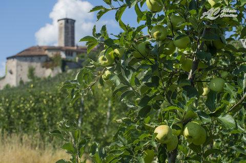 Il Castello e le mele