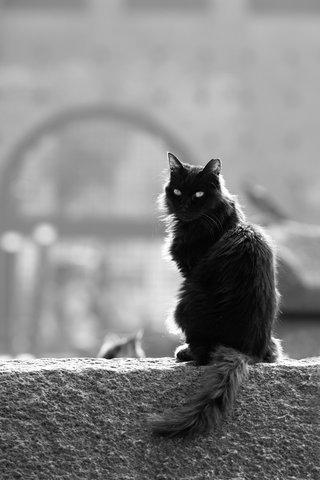 nero ombra