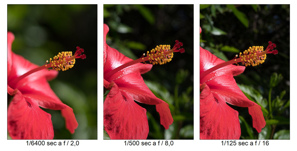 red.thumb.jpg.58f1a0aa1ed4d68d1ed6b21ac358cdfc.jpg