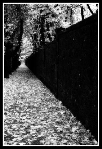 Muro....