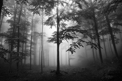 Ancora bosco...Ancora nebbia