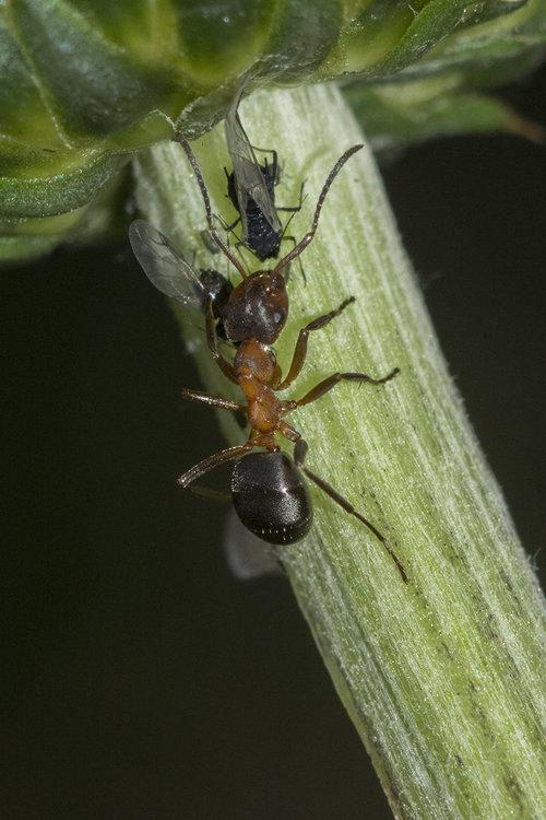ant.thumb.jpg.97d6460e0ee5329fbcda7a96de1c1e1a.jpg