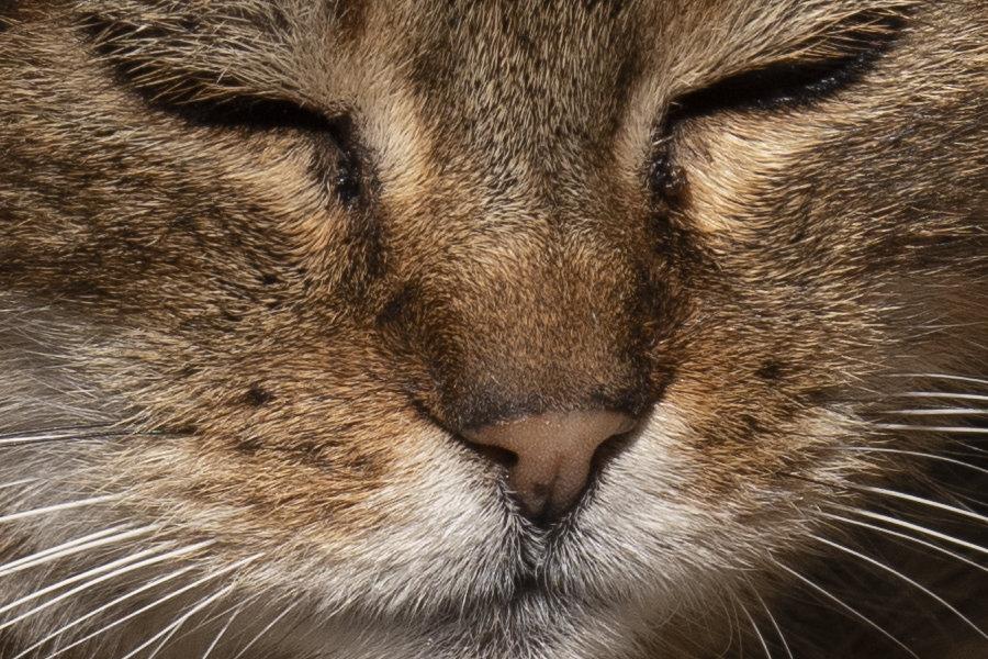 cat2crop.jpg.e959aed577e8ea7a93e8159a787ec5f5.jpg