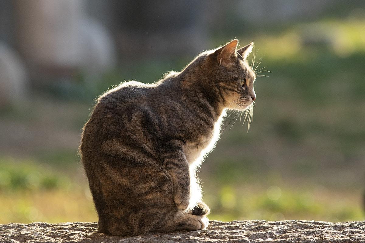 [divulgazione]  Facciamo fuori i gatti australiani?
