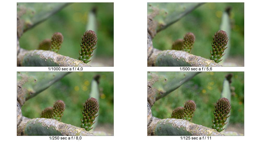 spine.thumb.jpg.f3fff2c15b110c1f6b8683806a316806.jpg
