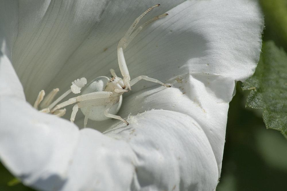crabspid.thumb.jpg.93cd39bbfd65383bc4f81f2d49147493.jpg