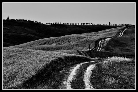 Strada Bianca...in Val d'Orcia