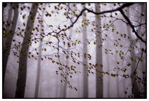 Primavera...Vento e Nebbia