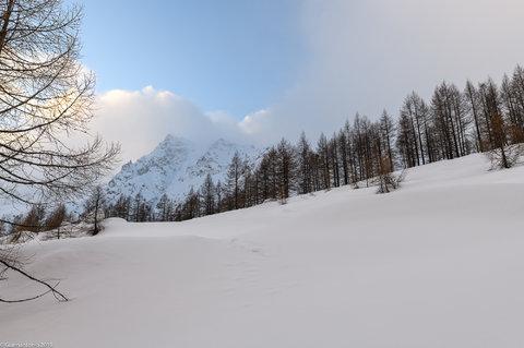 Contrasti Invernali (1 di 1).jpg