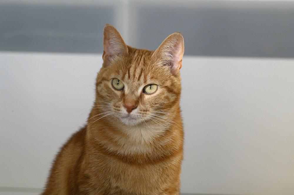 catw1.thumb.jpg.fb6d6604e49526c38f8a41505f8370e7.jpg