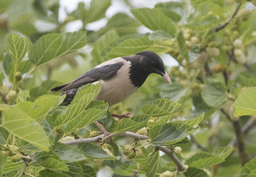 Attrazioni Ornitologiche...