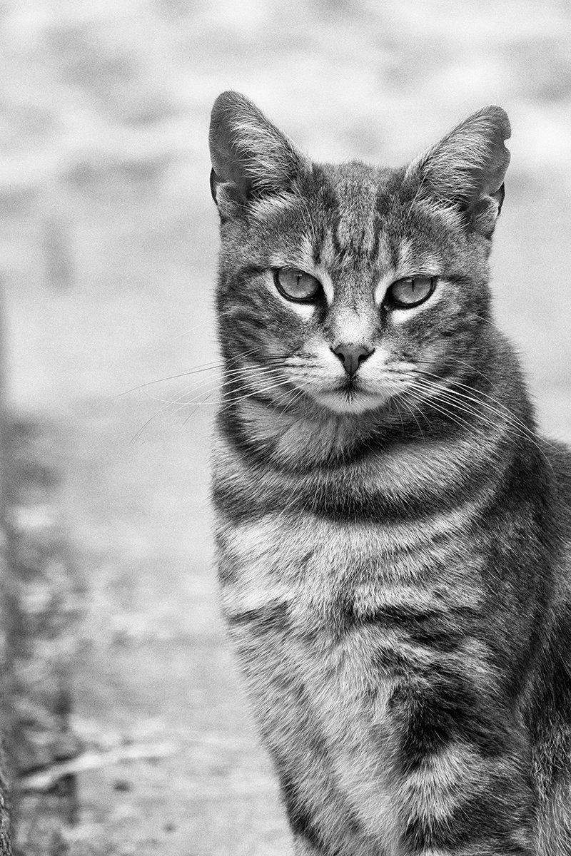 Solo ...un gatto.