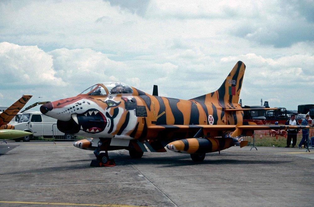 tiger18.thumb.jpg.c84768113a6aef4c7da08e2ef915e868.jpg