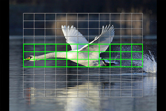 Olympus-firmware-upgrade-to-support-bird-detection-AF.jpg.bf6111c027852c80719737089a7c4eae.jpg