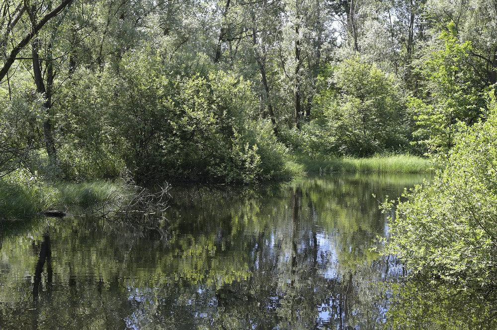 landscape.thumb.jpg.ddfb7eeb1e9af70c6bd3069f825f20c1.jpg
