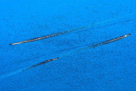 003  28062020 -_Z5L3865  Max Aquila photo (C).JPG