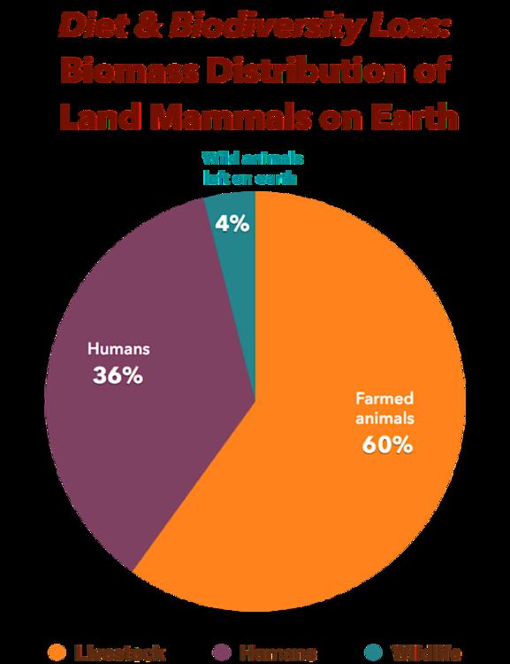 Diet-Biodiversity-Biomass-Pie-Chart-awfw-788x1024.thumb.png.3f95e896cdac5464747423b3e7272491.png