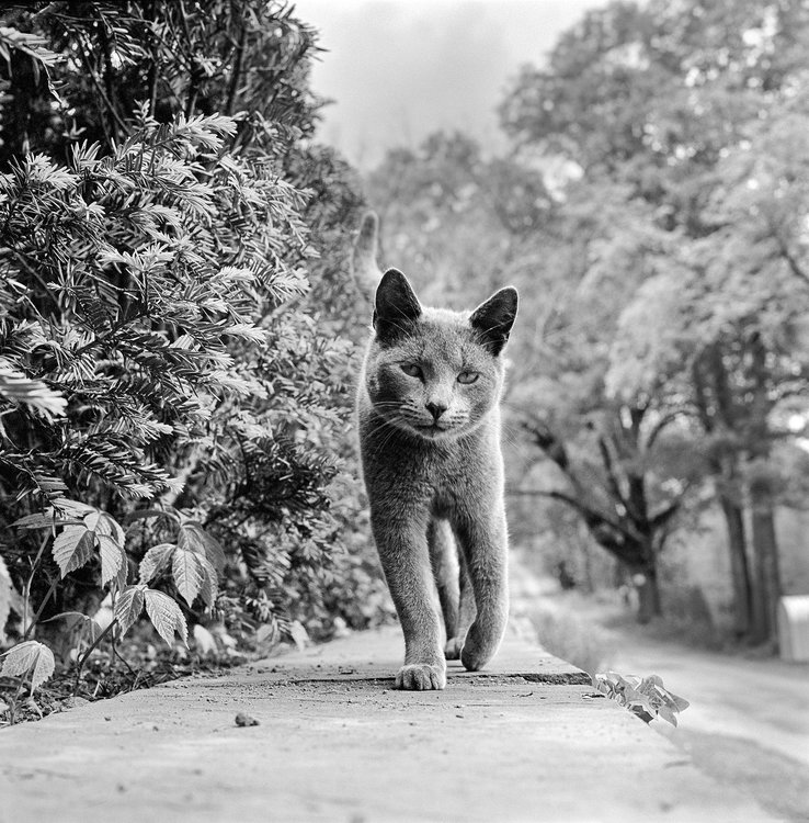 WALTER-CHANDOHA-CATS-LEDE.thumb.jpg.65d9cd17588367013788a5802601ae3f.jpg