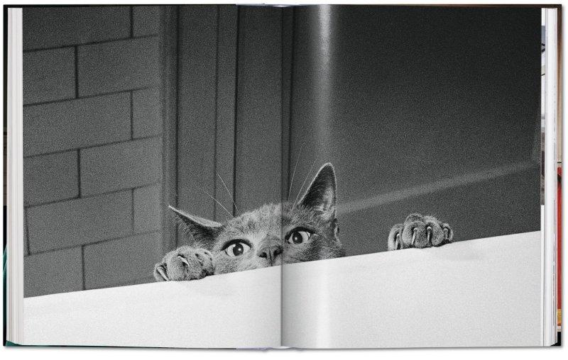 fo-walter_chandoha_cats-image_06_05344.jpg.27747ff8620b2b0d6b4f596f214775ed.jpg