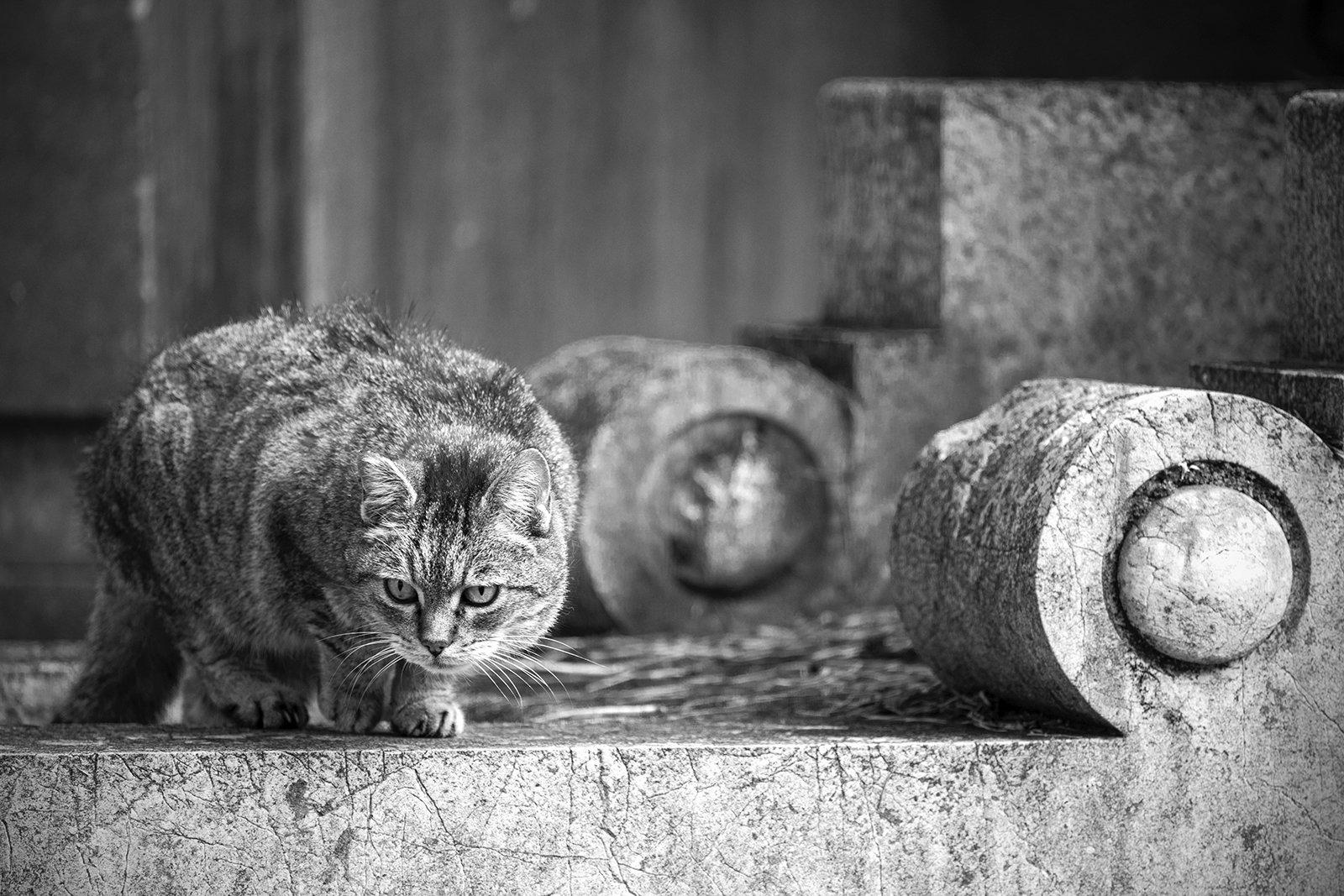 Alley cats/Gatti di strada