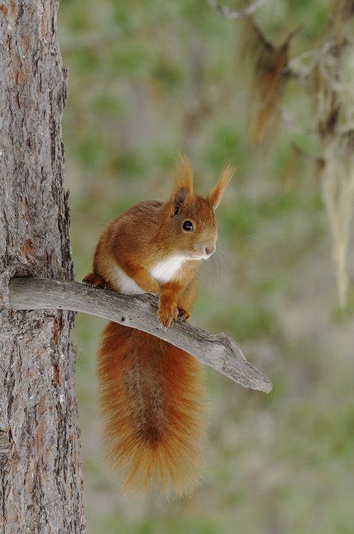 scoiattolor.thumb.jpg.76aaa6585b07172664ce16ea5ac8315c.jpg