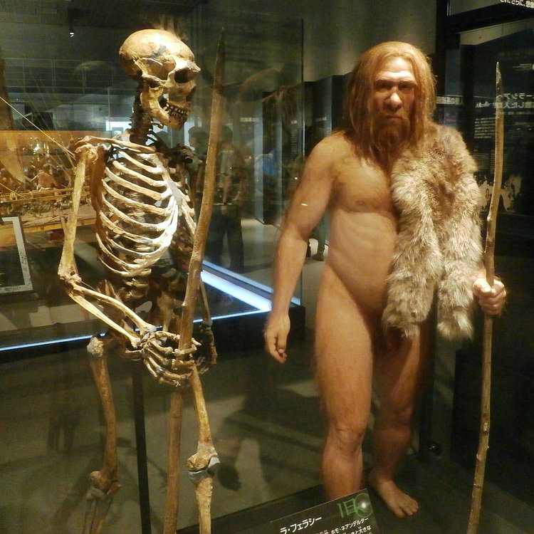 Skeleton_and_restoration_model_of_Neanderthal_La_Ferrassie_1.thumb.jpg.82cb684577a5ddbc891ed0a3fcac6a44.jpg