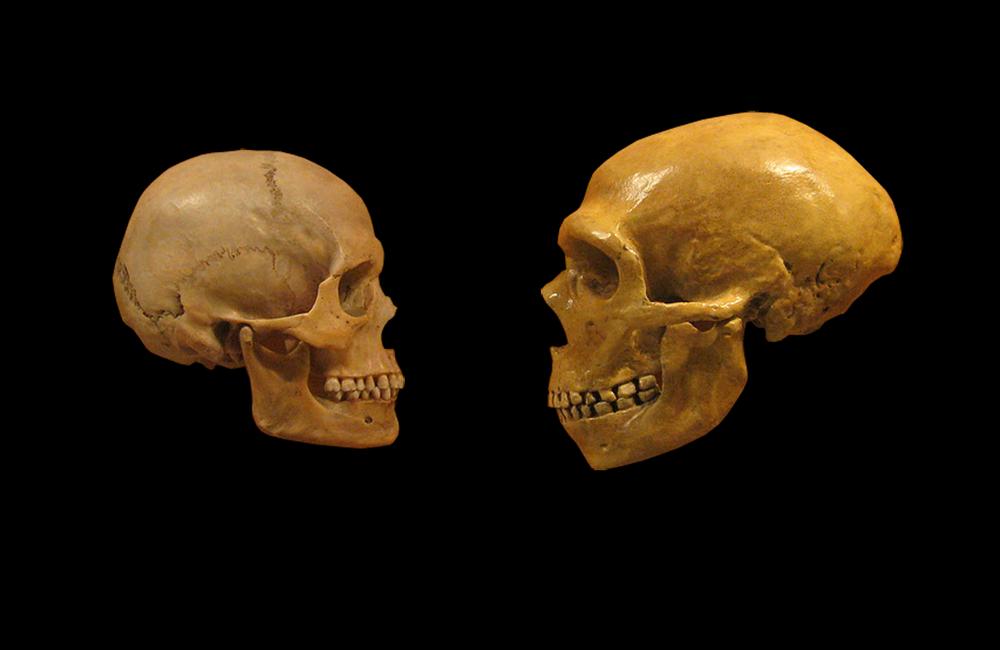 skulls.thumb.png.a55dc75f2b7a40f8c610820971879f77.png