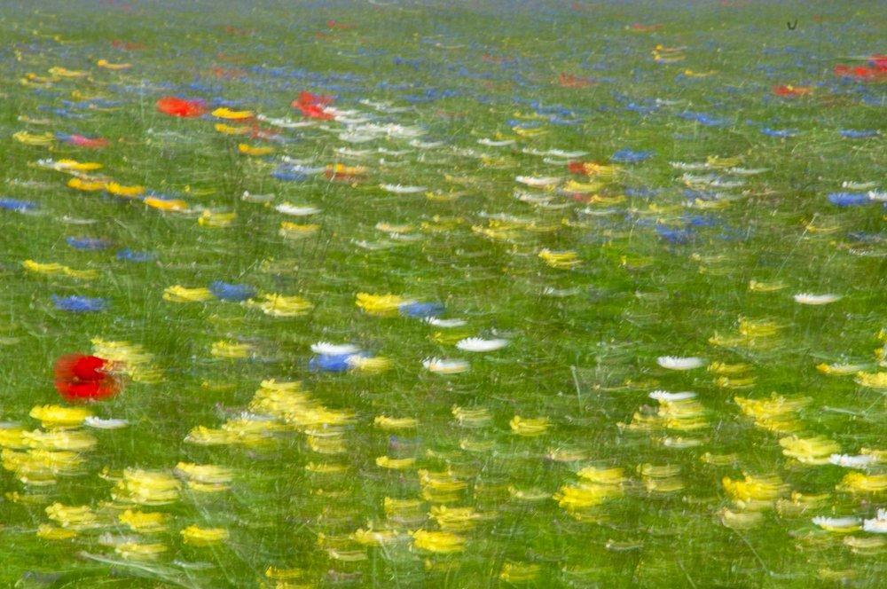 jpg in LR campo fiorito castelluccio-10.jpg