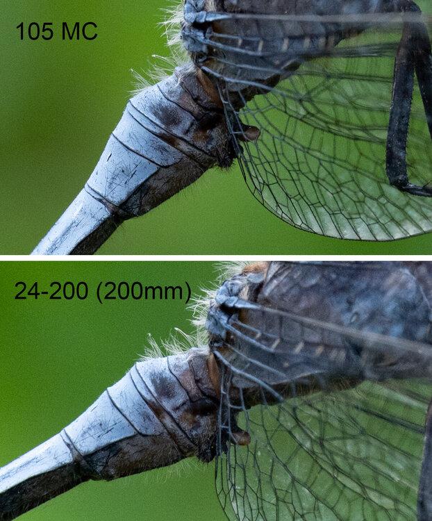 comparison.thumb.jpg.a0727b6c920c37f12c5044a0fd432bf6.jpg