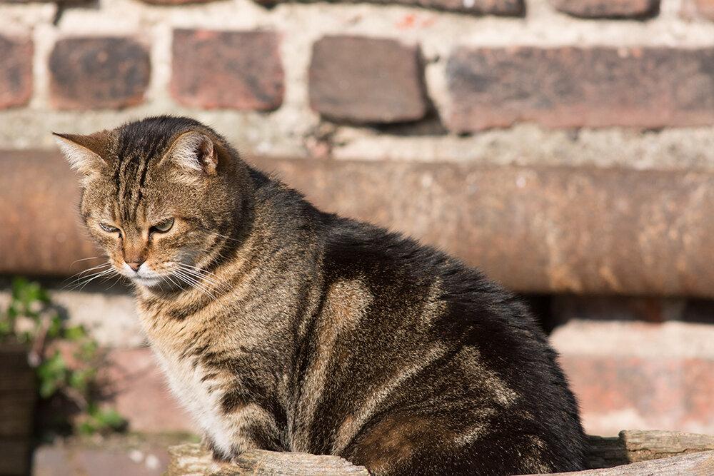cat2.jpg.836055216bf00a9ae3067820a4aa80f5.jpg