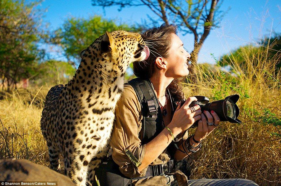 31F3234F00000578-3480156-She_s_got_it_licked_Shannon_receives_the_affection_of_a_leopard_-a-33_1457371240920.jpg.6a91150551485196910f81eeeaac350e.jpg