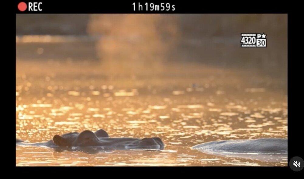 Nikon-Z9-camera-teaser-6.thumb.jpg.d9aec35b2c35fe5399ffb67e2bc5ee80.jpg
